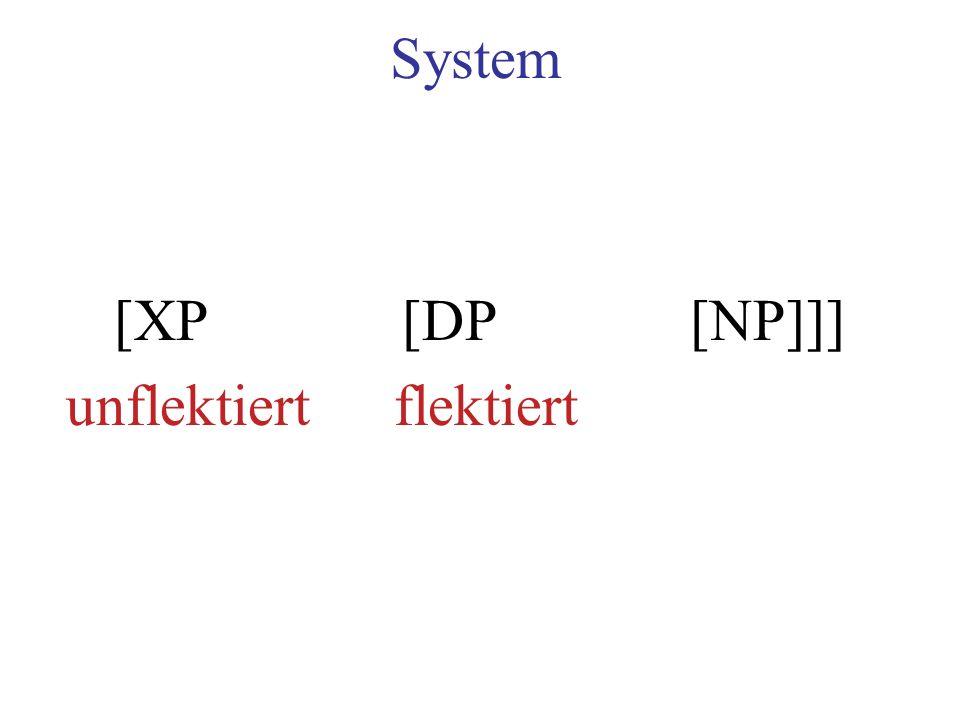 System [XP [DP [NP]]] unflektiert flektiert